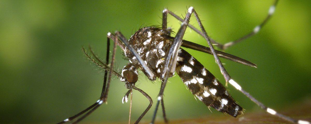 dengue em americana